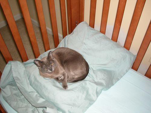 Meeka's Crib 6-06