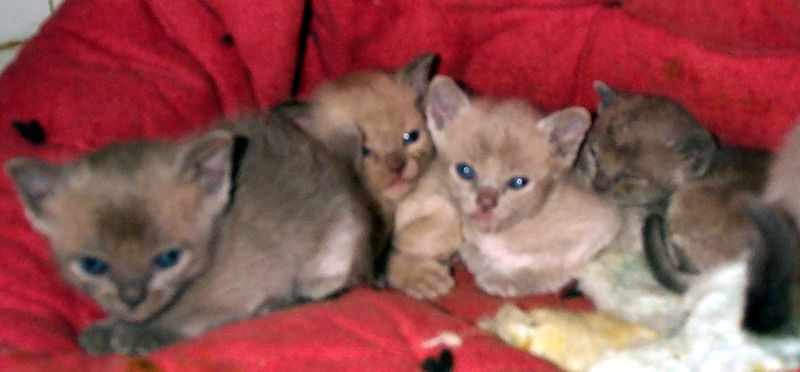 Our Kittens 11-2004