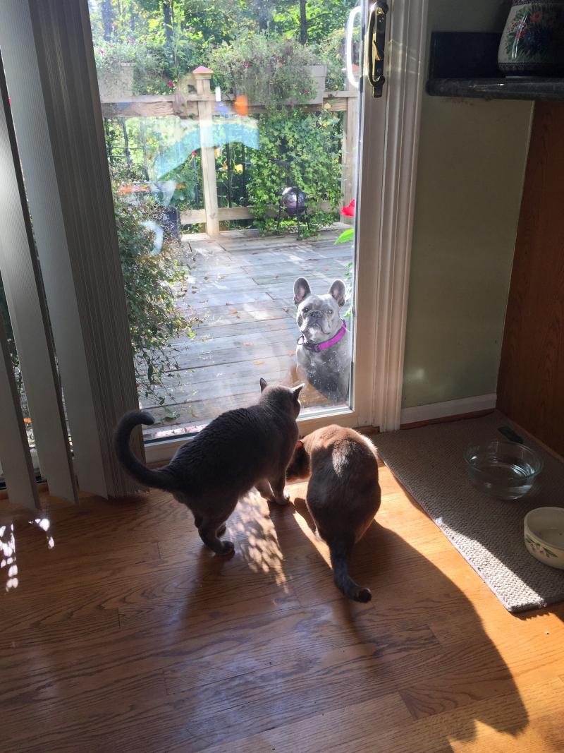 Cats & Dog - 1